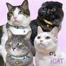 iCat カジュアルカラー 小花フラワー【卸 猫用品】