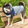 柴犬8.5kgの凪ちゃんはネイビーのXXLを着用