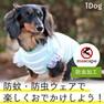 iDog フリルレースボーダータンク moscape【卸 犬用品】