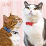 iCat ラブリーカラー ボーダーガーゼ×デニムリボン【卸 猫用品】