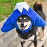 柴犬8.3kgの凪ちゃんはLを着用