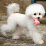 小型犬もくわえやすい大きさ