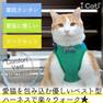 iCat 猫用コンフォートハーネス リード付き リボンと切替ストライプスター【卸 猫用品】