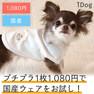 iDog キラキラスタータンク アイドッグ【卸 犬用品】