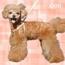 iDog ワンタッチハーネス カラフルストライプ【卸 犬用品】