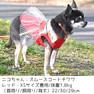 チワワ1.8kg(首22/胴30/丈29cm)のニコちゃんはレッドのXSを着用