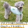 iDog くまさんのレース風ボーダータンク アイドッグ【卸 犬用品】