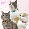 iCat キティカラー ピンドット【卸 猫用品】