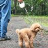 重過ぎないリールは小型犬にぴったりです