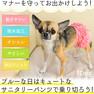 iDog サニタリーパンツ ボリュームフリル アイドッグ【卸 ペット用品】