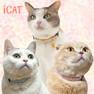 iCat カジュアルカラー 小花柄【卸 猫用品】