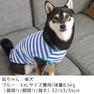 柴犬8.5kg(首32/胴53/丈35cm)の凪ちゃんはブルーのXXLを着用