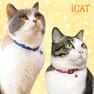 iCat キティカラー ランダムスター【卸 猫用品】