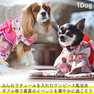 iDog 愛犬用浴衣ワンピ 花みやび【卸 犬用品】