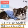 iDog レースボーダーTシャツ アイドッグ【卸 犬用品】